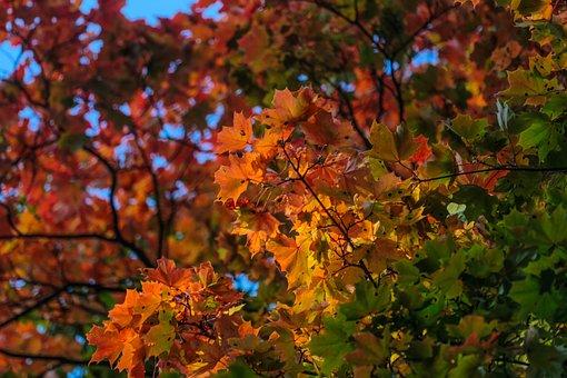 Autumn, Beauty, Paint, Stroll, Maple, Russia, Mood