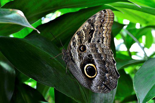 Butterfly, Flower, Nature, Natural, Moth, Leaves