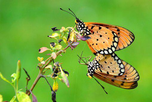 Couple, Butterfly, Wildlife, Love, Wedding, Nature