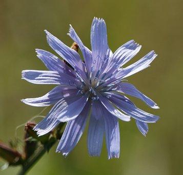 Flower, Weed, Plant, Nature, Bloom, Meadow, Purple