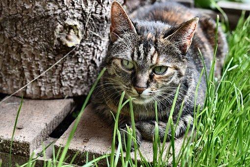 Cat, Mieze, Nature, Kitten, Domestic Cat, Pet, Cute