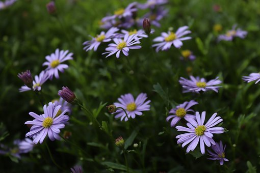 Flowers, Purple, Tender, Purple Flower, Blossom, Bloom