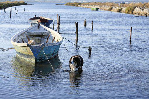 Boat, Water, Pond, Solitude, Fishermen, Dog, Bathing