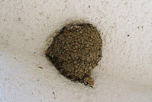 Swallow's Nest, Bird Nest, In The World We