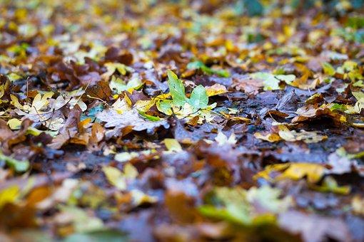 Autumn, Leaves, Colorful, Fall Foliage, Away, Concerns