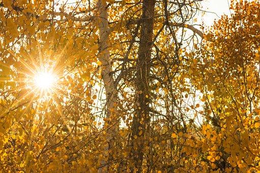 Sun, Fall, Autumn, Nature, Light, Foliage, Yellow