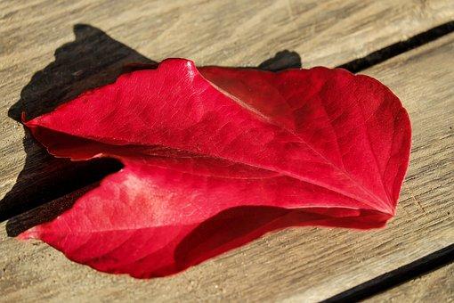 Autumn, Autumn Leaf, Leaves, Fall Foliage, Leaf, Red