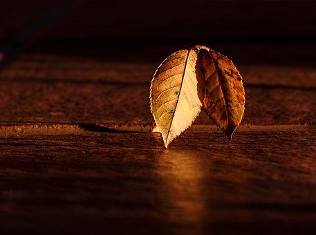 Leaf, Autumn, Dawn, Golden Hour, Light And Dark