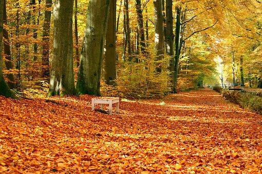 Park, Bank, Leaves, Autumn, Castle Park