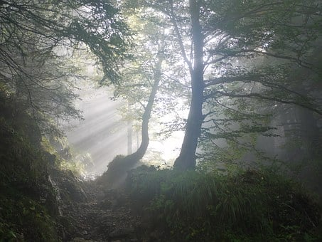 Morning, Fog, Sunbeam, Mystical, Mood, Colourless