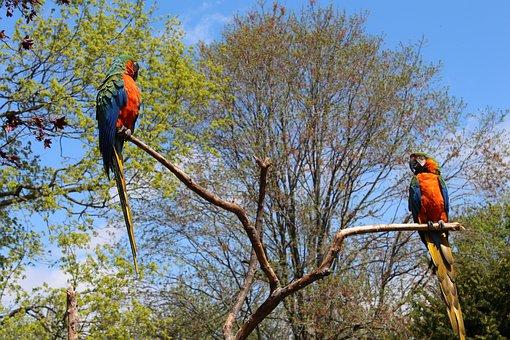 Parrot, Bird, Tropical, Nature, Cute, Pet, Beak, Zoo