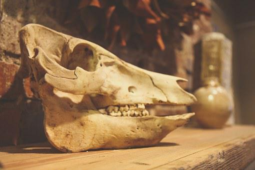 Skull, Animal, Dead, Skeleton, Nature, Bone, Anatomy