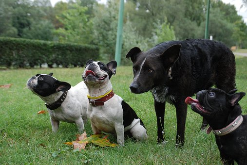 Dogs, Reward, Expect, French Buldogs, Look For, Outdoor