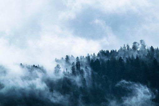 Fog, Forest, Mountain World, Clouds, Dramatic, Blue