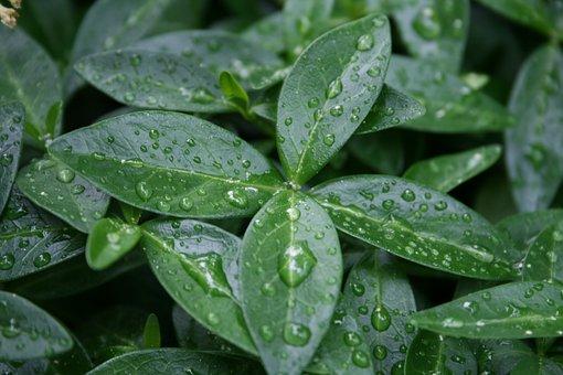 Wet, Plant, Nature, Rain, Green, Drop Of Water, Drip