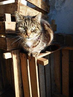 Cat, Eyes, Intense, Crates, Animal, Pet, Eye, Care