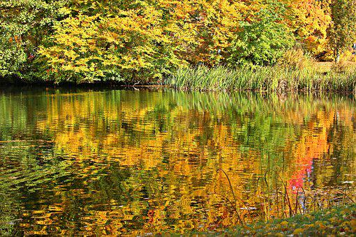 Autumn, Fall Foliage, Fall Color, Water, Mirroring