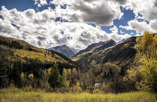 Colorado, Fall Leaves, Mountain, Fall, Autumn, Leaves