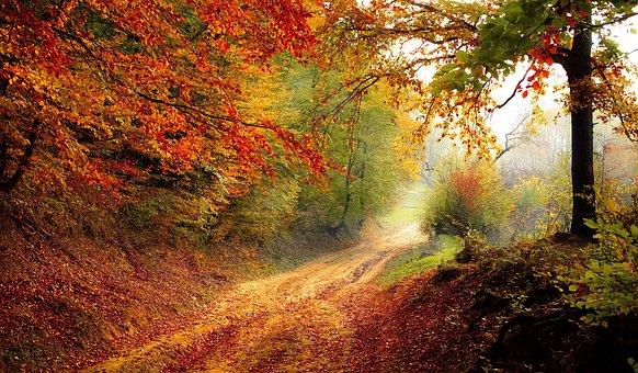 Road, Forest, Season, Autumn, Fall, Landscape, Nature