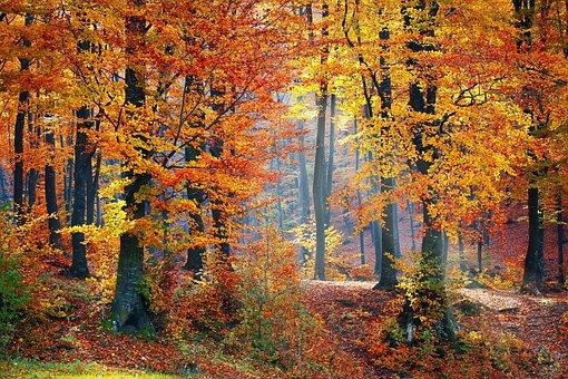 Woods, Forest, Nature, Landscape, Tree