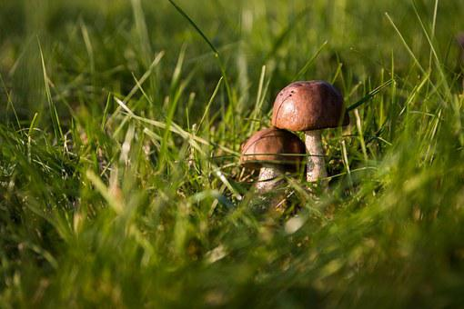 Mushrooms, Autumn, Forest, The Collection Of, Collect
