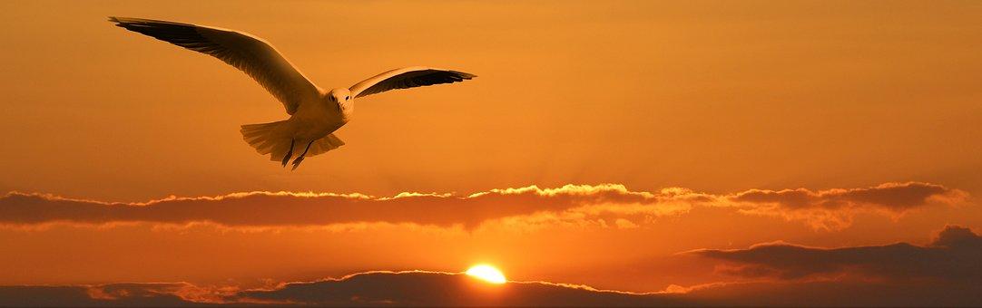 Gull, Bird, Flying, Orange, Sunset, Sun, Ease, Freedom