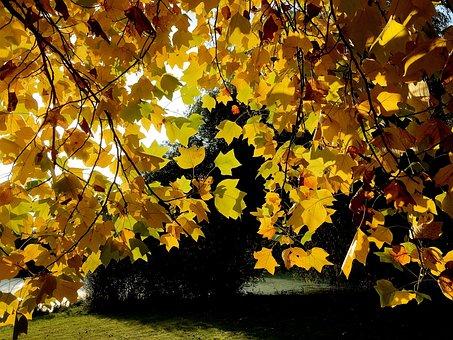 Leaves, Golden Autumn, Yellow, Golden, Autumn Mood