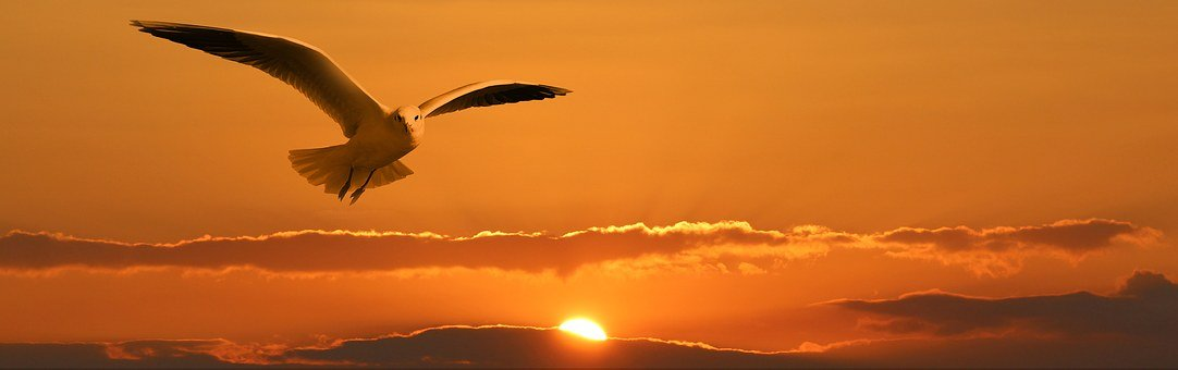 Gull, Bird, Fly, Orange, Sunset, Sun, Ease, Freedom