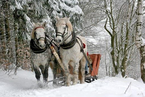 Sleigh Ride, Horses, The Horse, Winter, Snow, Forest