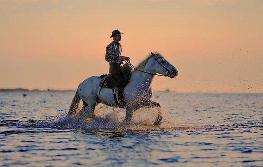 Jumper, Horse, Horses, Horseback Riding, Animal, Hiking