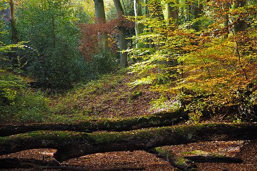 Autumn, Nature, Trees, Landscape, Forest, Farbenspiel