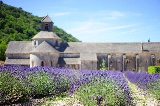 Lavender, Lavender Blossom, Lavender Cultivation
