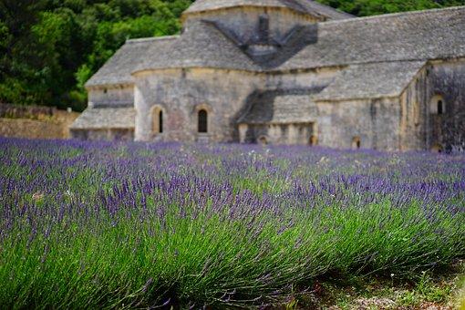 Lavender, Flowers, Blue, Lavender Field