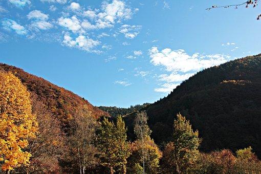 Landscape, Trees, Autumn, Mood, Fall Leaves, Leaves