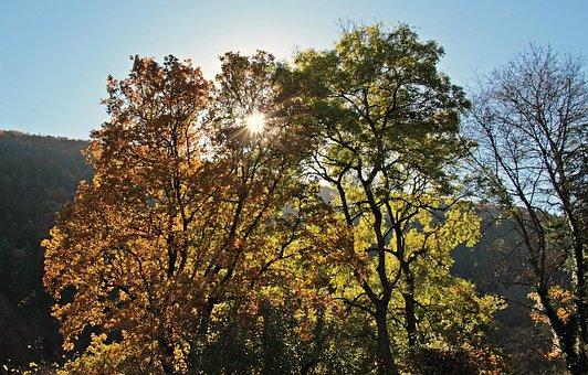 Trees, Autumn, Mood, Fall Leaves, Leaves, True Leaves