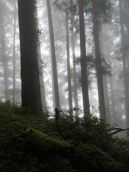Dim 朧 Beauty, Mountains, Woodland