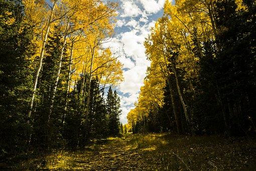 Colorado, Fall Leaves, Mountains, Fall, Autumn, Leaves