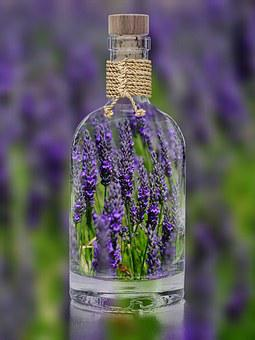 Lavender, Bottle, Plant, Spring, Purple, Nature, Field
