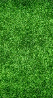 Nature, Green, Abstract, Plants, Herb, Grass