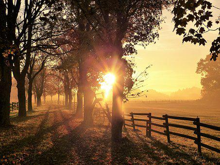 Autumn, Mood, Morning, Leaves, Fog, Nature, Trees