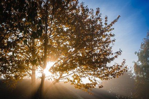 Tree, Autumn, Deciduous Tree, Leaves, Yellow, Orange