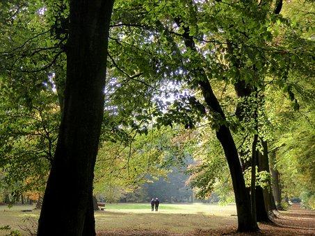 Autumn Mood, Park, Fall Color, Golden Autumn, Colored