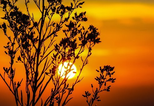 Sunset, Sky, Glow, Orange, Dusk, Twilight, Tree, Blur