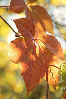 Fall Leaves, Autumn, Mood, Leaves, True Leaves