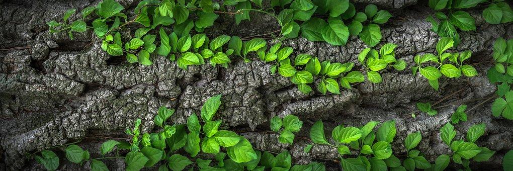 Wood, Bark, Plants, Nature, Surface, Wild, Leaves