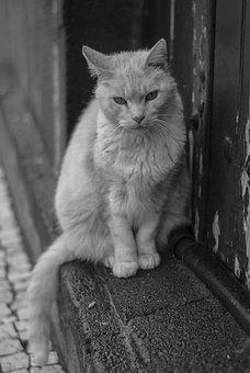 Animal, Pet, Cat, Domestic, Look, Feline