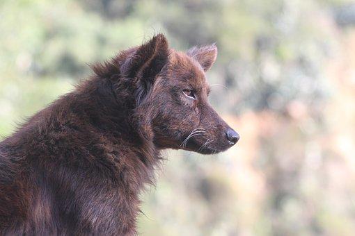Dog, Animal, Profile Dog, Wolf, Raceless, Homeless