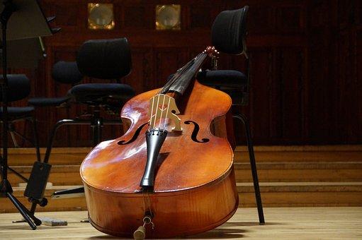 Bass, Double Bass, Musical Instrument, String, Concert