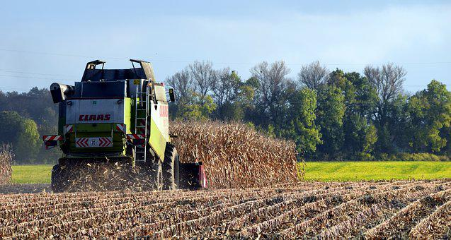 Harvest, Corn Harvest, Autumn, Harvest Time, Corn