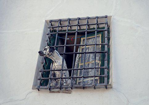 Dog, The Lone, Grille, Window, House, Old, Prison